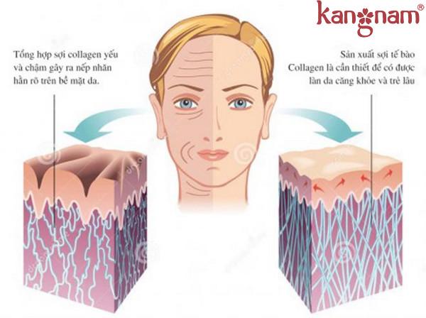bo-sung-collagen-toan-dien