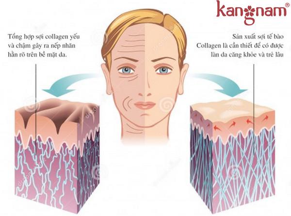 collagen-murad
